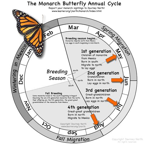 caterpillar s journey on the way to the sun books monarch butterflies are their way to chicago here