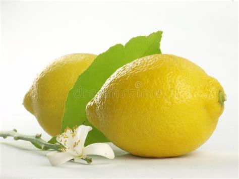 fiori limone fiori limone e frutta limone fotografia stock