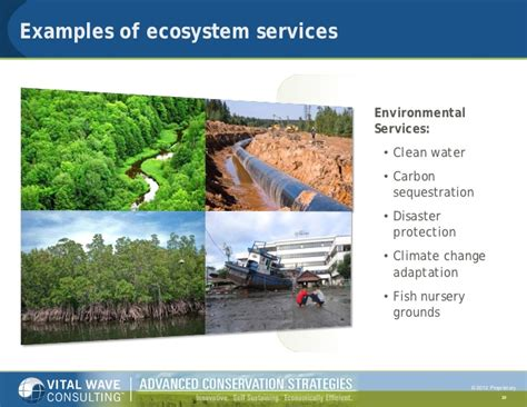 exle of ecosystem biodiversity and ecosystem services in the tourism sector