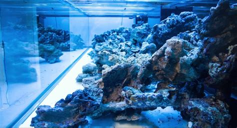 aquascape rule of thirds a masterpiece is born time lapse aquascaping of worldwide