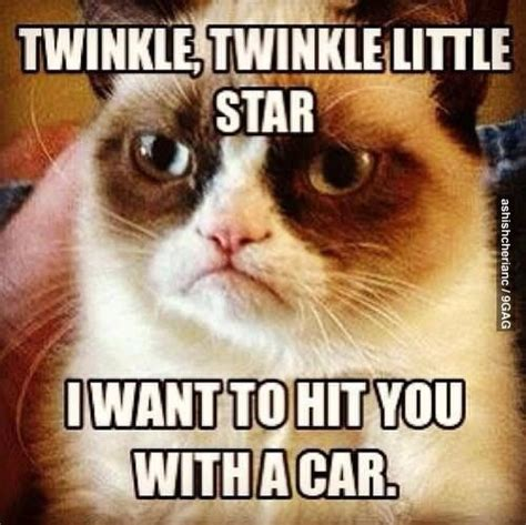 Grumpy Cat Love Meme - 30 very funny grumpy cat meme pictures and photos