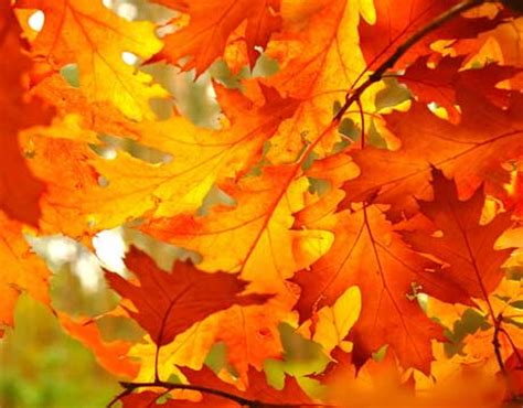 fall leaf colors 8 best fall paint colors how to decorate with fall colors