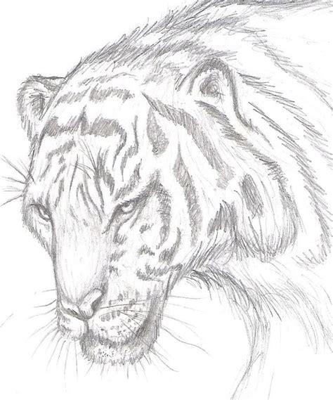 los mejores dibujos de animales 104 mejores im 225 genes sobre dibujos de animales a lapiz en
