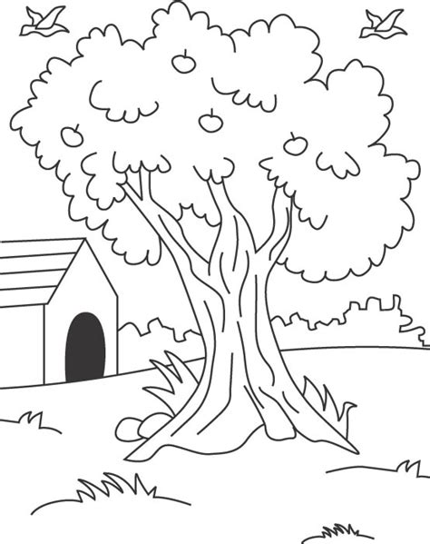 coloring page tree of life free coloring pages of tree of life