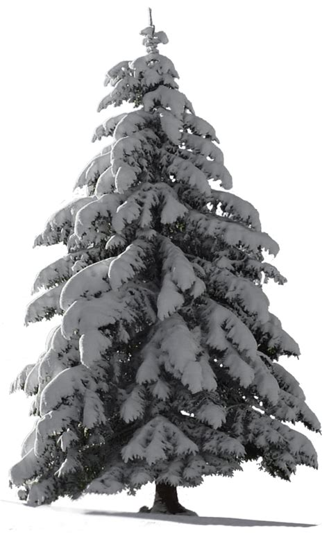 The Watcher In The Pine tree snow for my watcher stock by astoko on