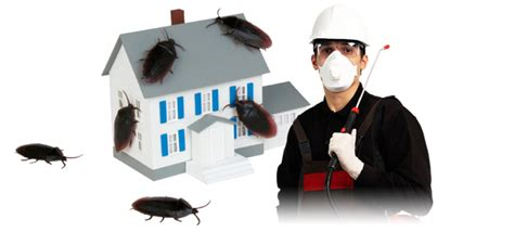 house pest control pest control perth to minimize possible of breeding
