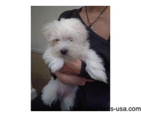puppies for sale 50 dollars for sale abbeville free classifieds