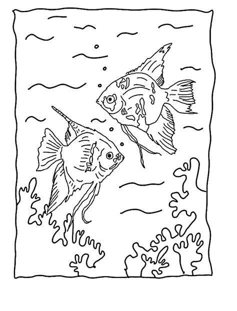 angelfish coloring page pages sketch coloring page
