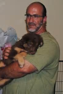 shamrock aussies update we puppies born 5