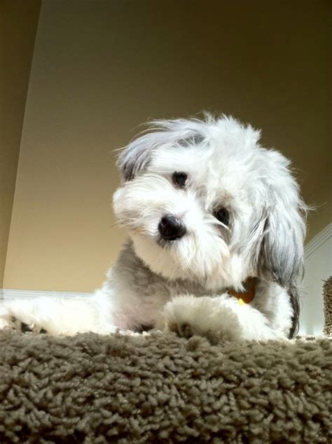 images  pets  pinterest puppys small