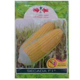 Bibit Jagung Manis Secada F1 benih jagung secada f1 200 gram panah merah bibitbunga