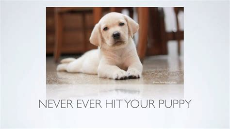 how to make puppy stop biting puppy tips how can i stop puppy biting and other aggressive behavior