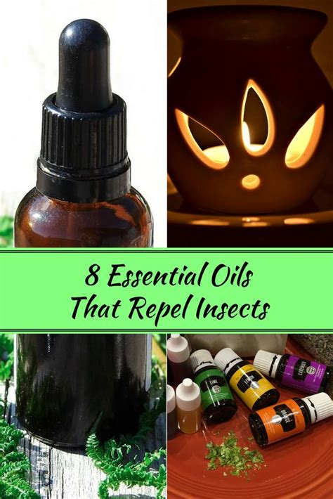 8 essential oils that repel insects home and gardening ideas