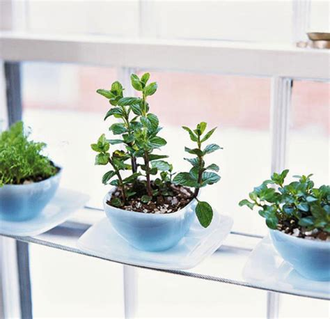 Small Windowsill Plants 20 Indoor Herb Garden Ideas Home Design And Interior