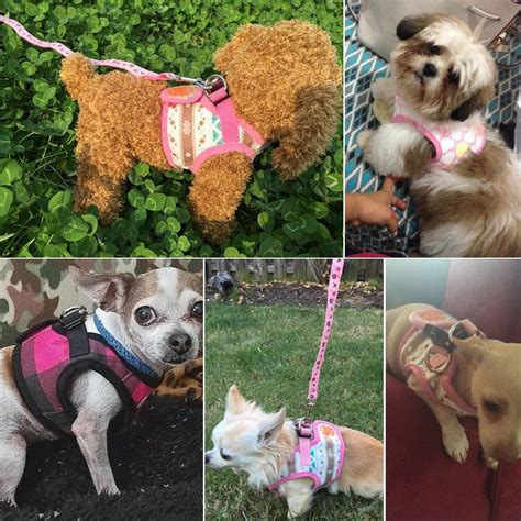 pomeranian puppy harness didog puppy harness vest leash set for cats small dogs