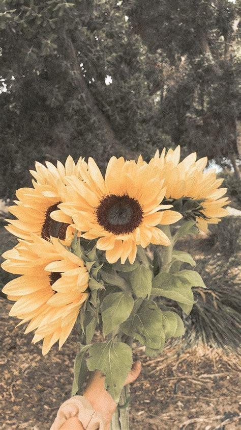 photo photography sunflowers flowers nature aesthetic