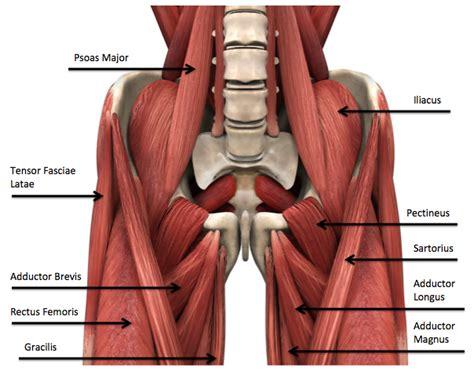 groin area diagram oregon exercise therapy egoscue posture exercises