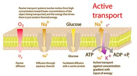 ciencias de joseleg conceptos previos al sistema nervioso