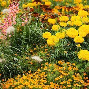 blumengarten anlegen blumenbeet anlegen ideen zum gestalten