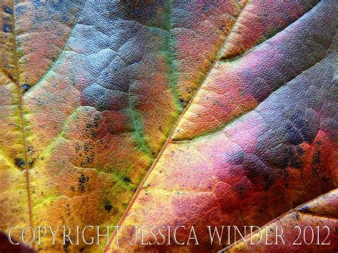 leaf pattern photography leaf close up photographic salmagundi