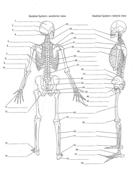 printable label the skeleton blank bones to label anatomy organ
