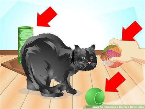 how to introduce a cat to a new home with pictures wikihow