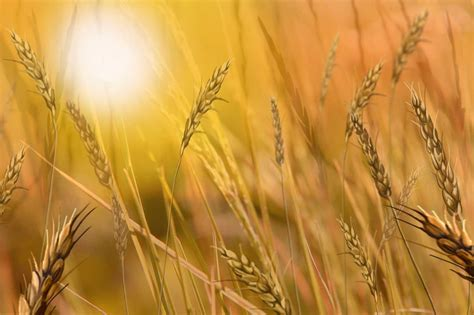 harvest background our bakery