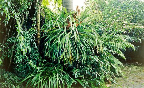 Plants That Don T Need Water dividing an elkhorn burke s backyard