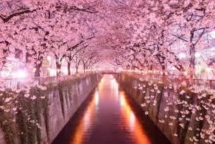 Botanic Gardens Lights Sakura