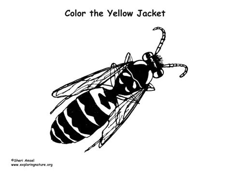 yellow jacket coloring nature
