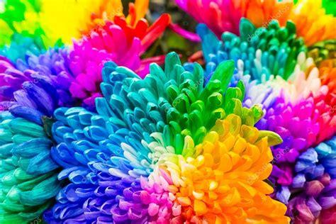 foto di fiori colorati arcobaleno di fiori colorati foto stock 169 littlehoney