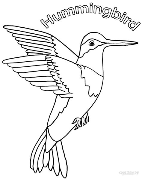 coloring page hummingbird hummingbird coloring pages