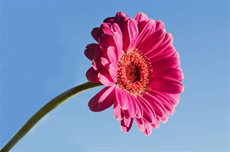 nice flower  stock photo public domain pictures