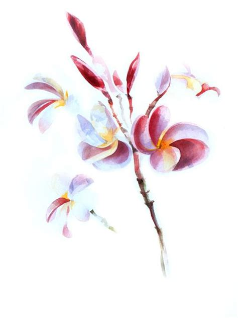 watercolor tattoo oahu 17 best images about plumeria on flower