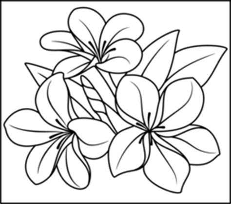 free coloring pictures of tropical flowers flowers coloring online
