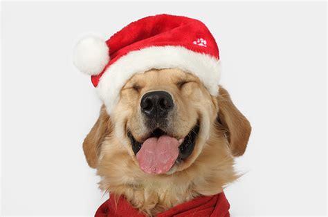 santa puppies carefree santa silly image 86583 on favim