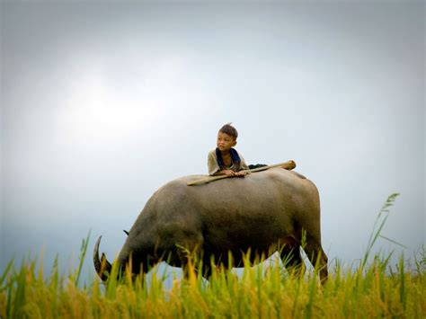 Wallpaper Anak Gembala | gembala dalam derita my locution ground