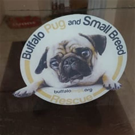 pugs buffalo ny buffalo pug small adoption center buffalo ny yelp