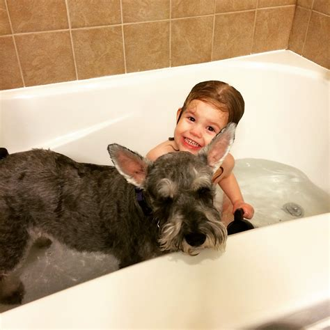 2 dogs in a bathtub bathtub dogs 28 images krum veterinary hospital