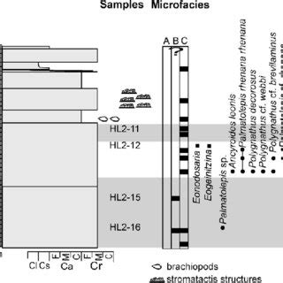 stratigraphy microaccess figure 5 lithology microfacies and conodont
