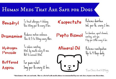 shih tzu allergies benadryl human meds that are safe for dogs kentucky at