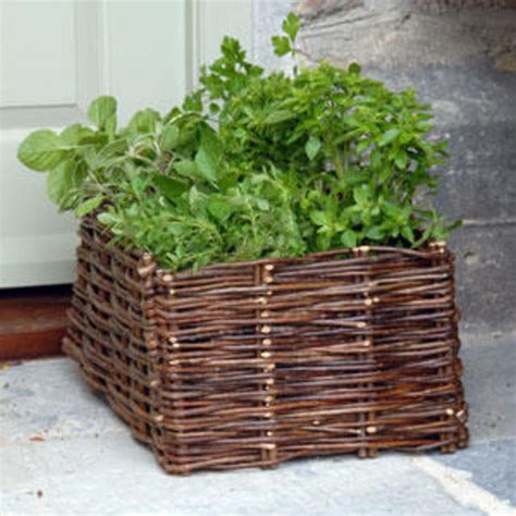 Wicker Outdoor Planters by Buy Wicker Planters The Worm That Turned Revitalising