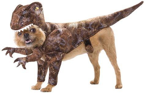 amazing dogs 20 absolutely amazing costumes style motivation
