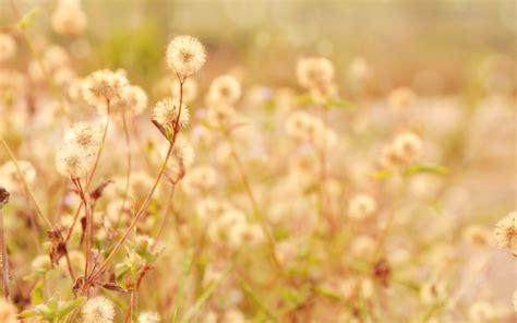 kwiat full hd tapeta  tlo  id