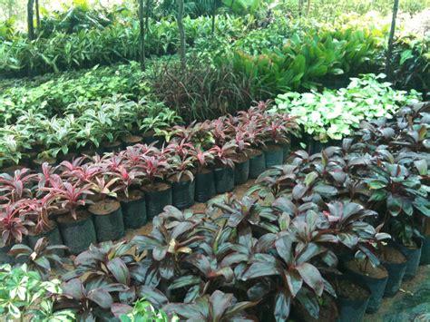 nursery plants garden living large on tiny lot