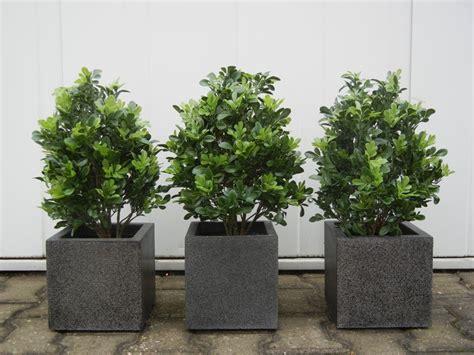 kunstpalme aussenbereich kunstpflanzen uv kuv8