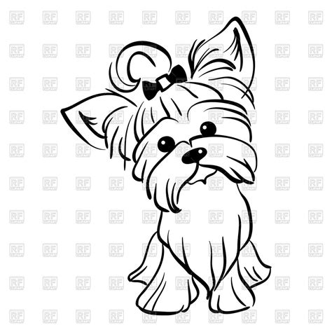 funny dog yorkshire terrier breed royalty free vector clip