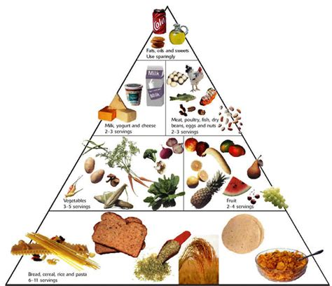 diagram of the food pyramid pyramid diagram jhzkim