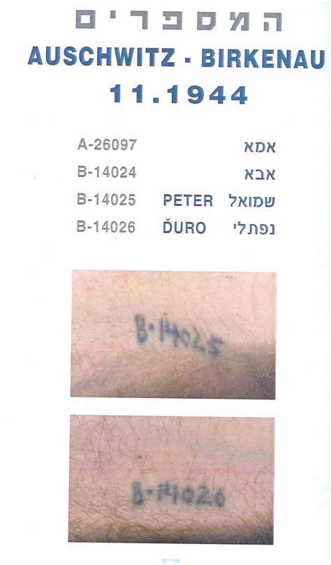 holocaust tattoo numbers a 7713 elie wiesel tattoo a 7713 related keywords suggestions