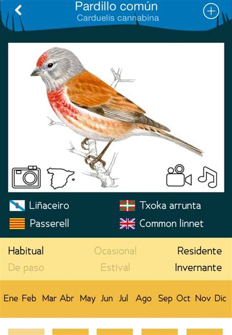 descargar libro e aves de europa todas las aves de espa 241 a para android descargar